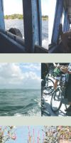 cycling ubin by fuzzyzebra