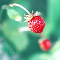 Sweet Summer by Zorg-One-One