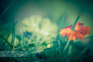 The lucky red by buschermoehle-photo