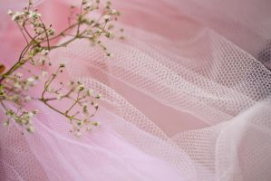 Pink Lace (8) by Avahlon-Stock