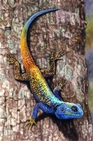 Southern Tree Agama by WillemSvdMerwe