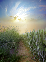 PREMIUM background - Path in the grass3 by Euselia