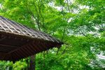 Japanese Hut by adamuchan