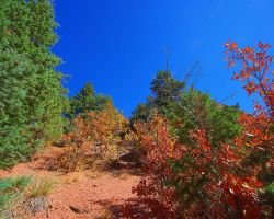 Autumn of the Mountain Desert by greenunderground