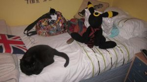 Umbreon plush NOW WITH CAT by ripple09