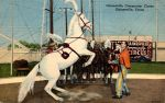 Vintage Texas - Circus Horse by Yesterdays-Paper