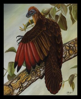 Archaeopteryx by HOULY1970