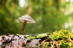 Micena inclined poisonous mushroom in forest by rejmann