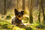 Mossy Forest Sheperd Dog by LuDa-Stock