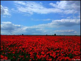 Poppy field by PaSt1978