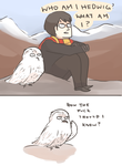 HP: WHAT AM I HEDWIG? by Randomsplashes