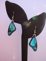 Glass Bl. Morpho Wing Earrings by FusedElegance