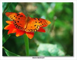Butterfly X by ScoobyUSA