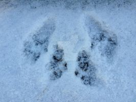 Squirrel snowprints by Bwabbit