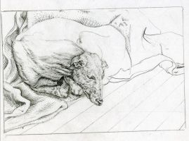 Durer Study Drawing by aludden10