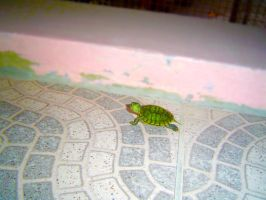 Squirtle The Red Ear Slider by luisakanewt