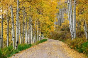 Fall Road by porbital