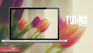 Wallpaper Tulips by RoaringWindd