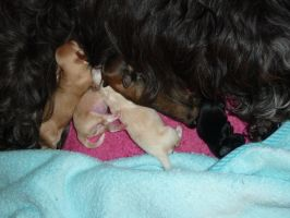 Caddys Babys 1 day old by Snowstorm-wolf