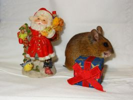 Madame Mulote et le pere Noel by eco6org