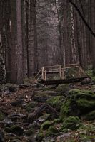 In the forest 1 by N0-Tolerance