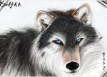 Wolf by Himeviti