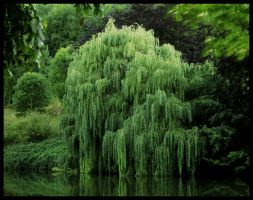The Willows Weep by gid