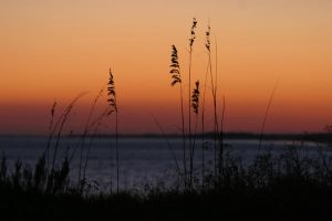Sea Oats by Deidreofthesorrows