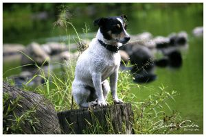 pooch by the stream by jaydoncabe