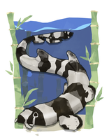 Bamboo Shark by Stormful