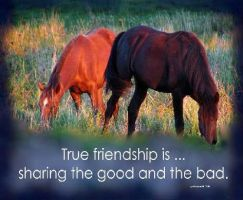 ..True Friendship Is.... by lyndonovan