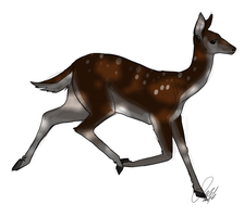 Deer trot doodle by Wolf-Shadow77