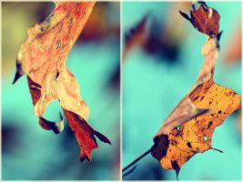 Maple Leaf Portraits by incolor16