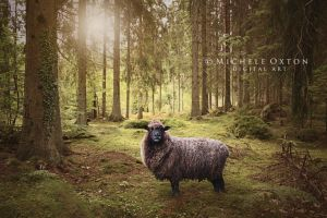 Sheep in the Woods by micheleoxton