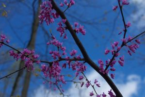 Flowers and Blue Sky by nwalter