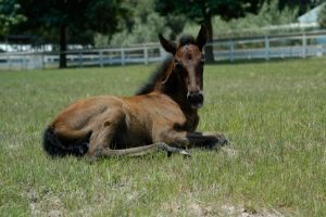 Andalusian Foal by Deirdre-T