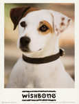 Wishbone - Early Press Photo by The-Toy-Chest
