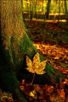 And the leaves fall by AStoKo