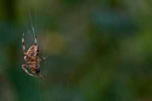 Spider in web stock by Quinnphotostock