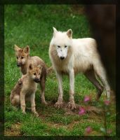 wolf family by miezbiez