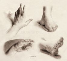Hands and Feet by ArandaDill