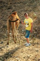 Camel, thumbs up by MissNasuta