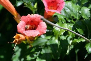 Bee, Sitting At the Trumpet Entrance by Miss-Tbones