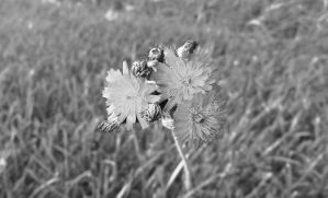Trio BW by LAPoetry-n-Photo