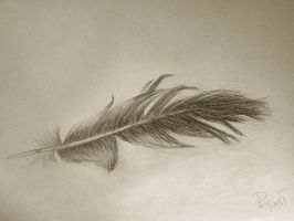 Feather by Ktostam25