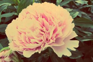 23.52: Bloom by allyalltheway