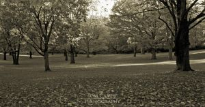 Deming Park by tominabox1