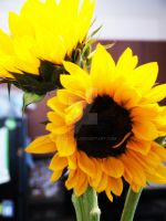 Sunflowers by 2greentail