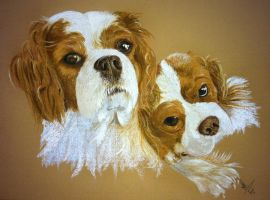 Cavalier King Charles Boys by resistanceispointles