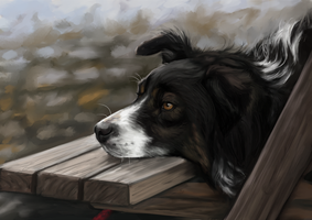 Collie by kaijae